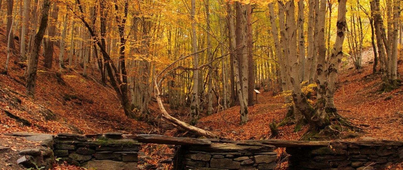 Hayedo de la Tejera Negra, el Bosque Sagrado
